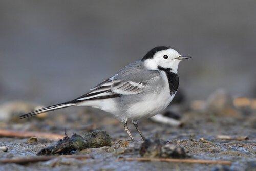 5 belas aves urbanas: conheça-as aqui!