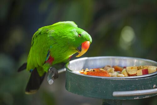 Alimentos proibidos para papagaios