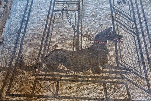 animais na Roma Antiga: mosaico mostrando um cão de guarda