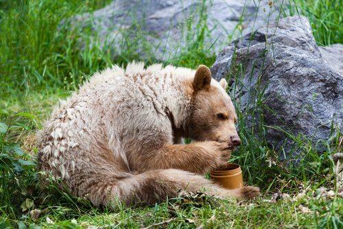 5 animais que comem mel