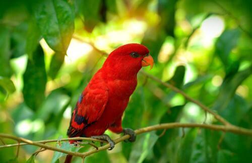 animais vermelhos: arara