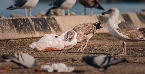 Aves marinhas, ameaçadas pela mudança climática e plásticos