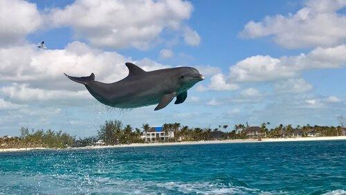 Golfinho saltando