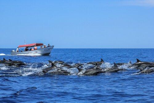 Golfinhos na baía da Califórnia