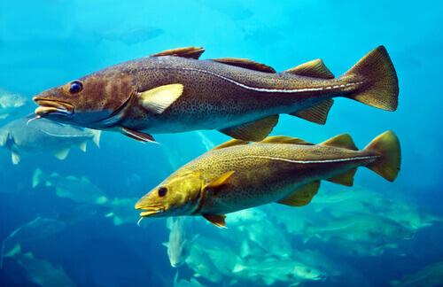 peixes no mar