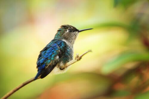 Conheça o Panamá e suas 5 espécies de aves mais comuns