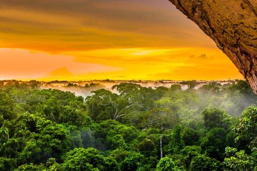 Biodiversidade do Amazonas, um rio repleto de vida