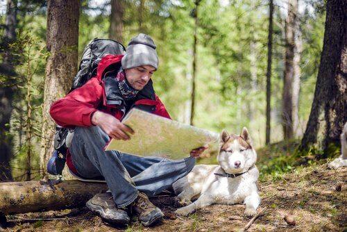 Caminhadas com seu animal de estimação: questões a considerar