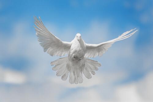 Canções dedicadas aos pombos