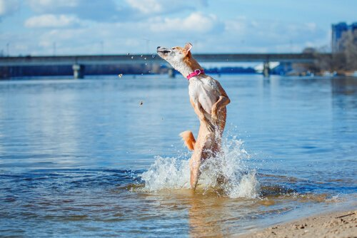 Cachorro tomando banho de rio