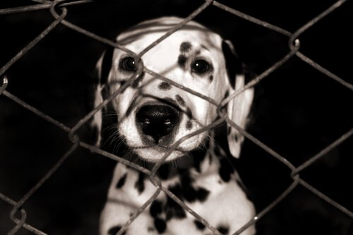 O que fazer para ser um lar temporário para animais?