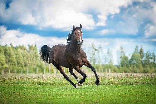Cavalo sangue quente