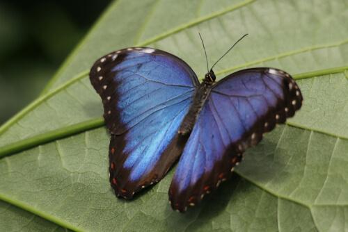 5 animais azuis: conheça esses lindos espécimes