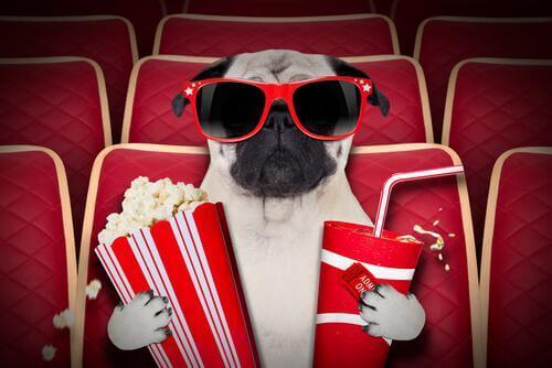 Cinemas para cães: saiba tudo sobre