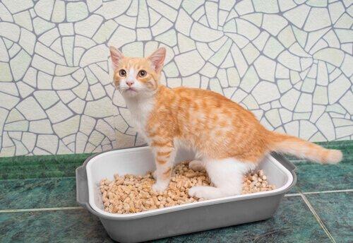 filhote de gato na caixa de areia