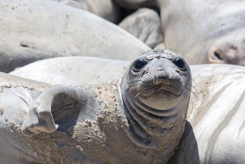 Tem Na Web - Como é a vida das focas? Tudo sobre seu comportamento - Meus Animais