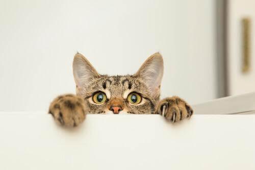 A curiosidade matou o gato