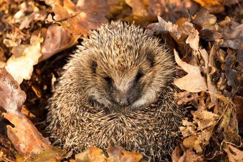 O que é a dormência em animais?
