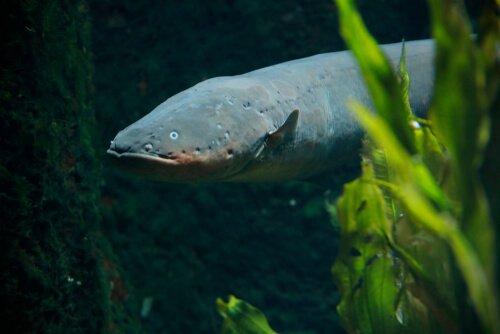 Rio Amazonas e a fauna ao redor