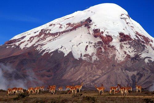 Fauna do Equador