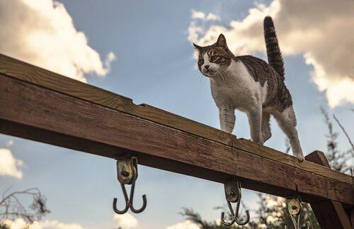 gato cambaleia ao caminhar