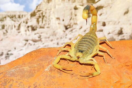 Animais que se adaptaram à vida no Saara