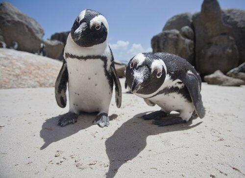 Quantas espécies de pinguins existem?