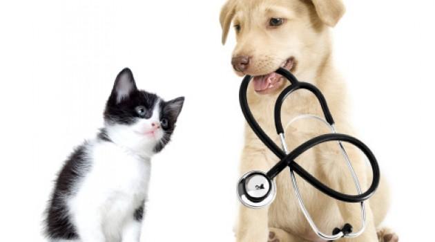 Confira os exames que seu pet deve fazer todo ano
