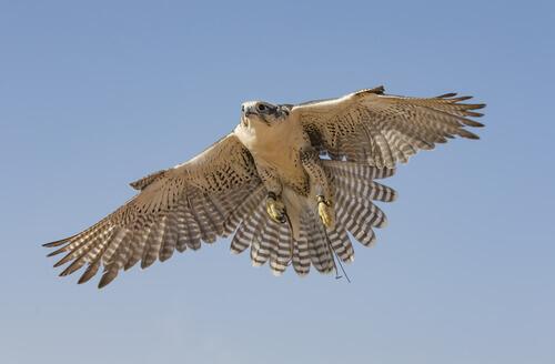 As 5 aves que voam mais rápido