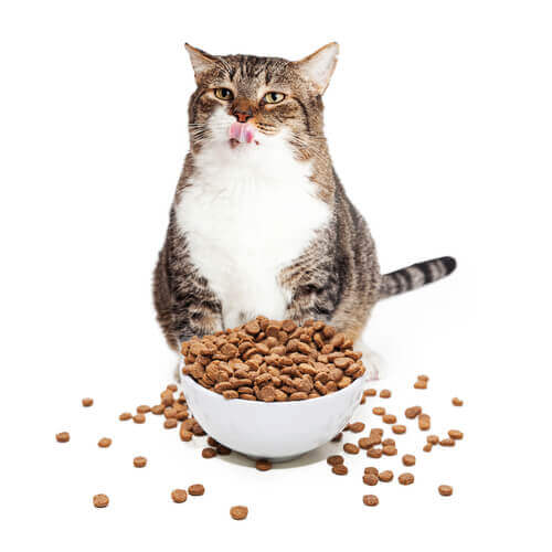 dieta felina