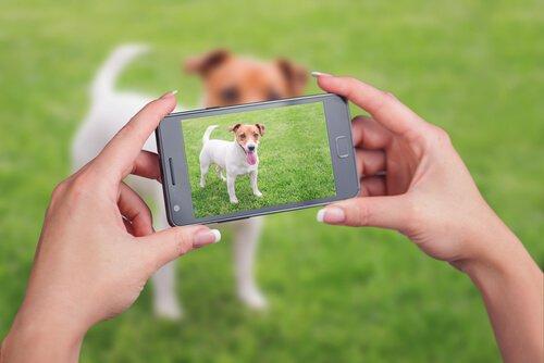 Como fazer um vídeo de seu animal de estimação?