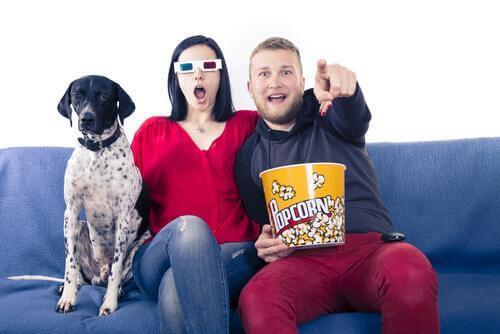 cinema para cães: assistir a um filme com seu amigo