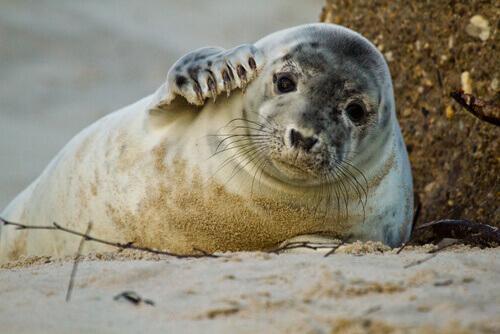 5 animais que vivem na praia