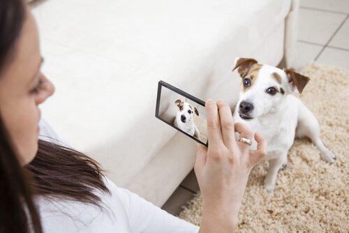fazer um vídeo de seu animal de estimação