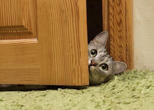 curosidade dos gatos