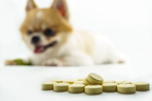 homeopatia veterinária