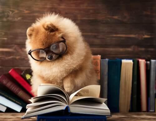 O experimento de inteligência em que os cães falham