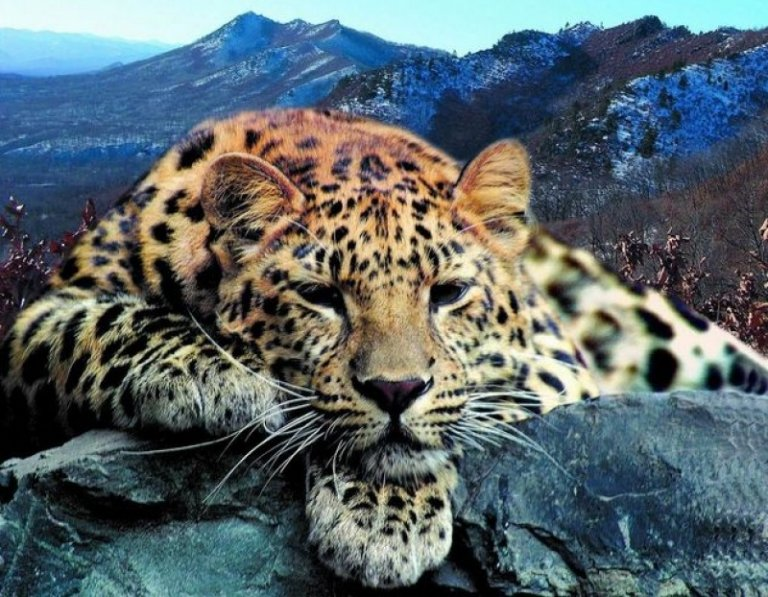 5 espécies em estado crítico de extinção