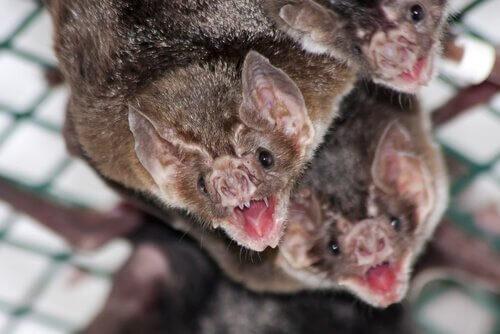 5 animais que se alimentam de sangue