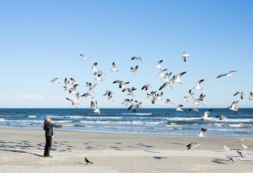Músicas dedicadas aos pássaros