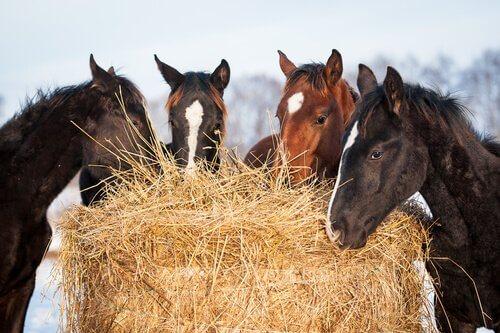 Nutrientes de que seu cavalo precisa