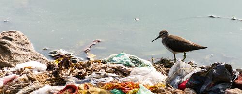 poluição por plásticos e ave marinha