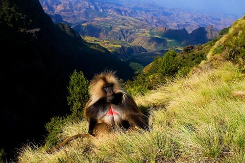 Parque Nacional das Montanhas Simien