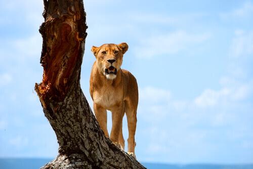 5 parques nacionais da África que você não pode perder