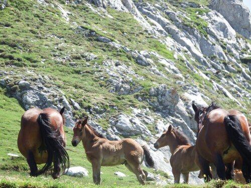 Cavalos livres