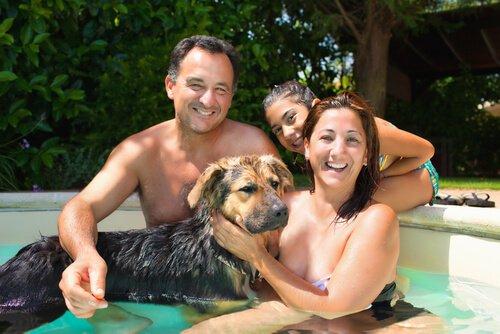 Algumas dicas para comprar uma piscina para cachorro