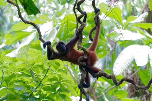 Santuário dos macacos