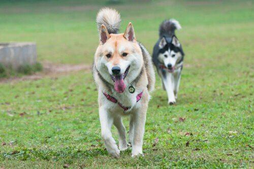 cães e a disfunção erétil