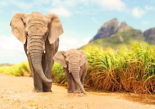 Tecnologia que detecta terremotos é usada para proteger elefantes