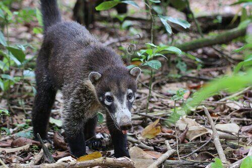 Como é a fauna na América Central?
